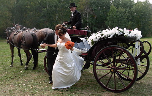 Horse drawn carriage for a wedding couple